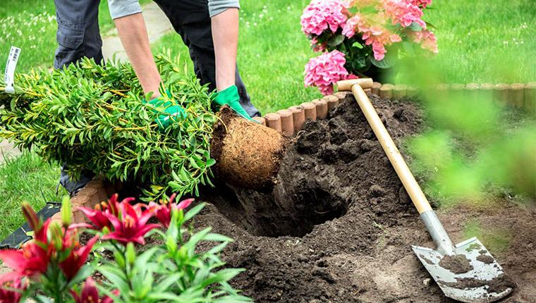 Jardiner au printemps : par quoi commencer ?
