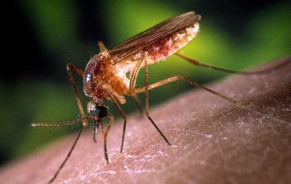 anti-moustique efficace