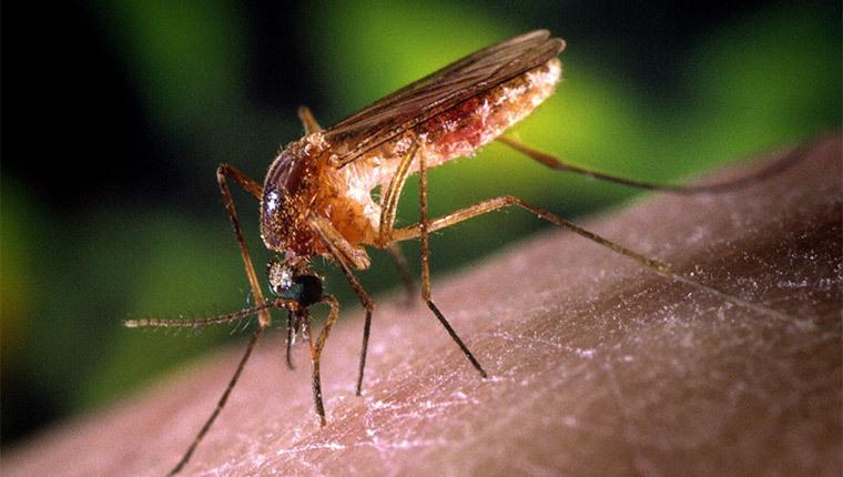 Comment lutter efficacement contre les moustiques ?